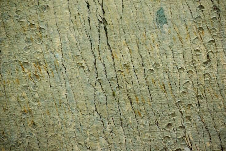 長頸龍化石腳印